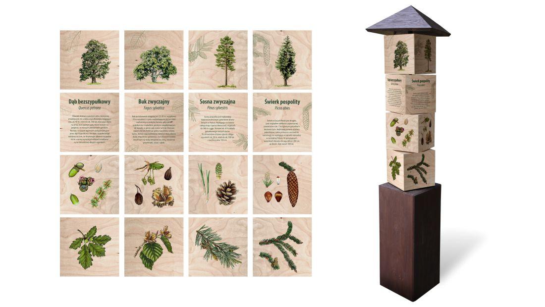 KWm-2 - Gra edukacyjna kostki wiedzy - drzewa