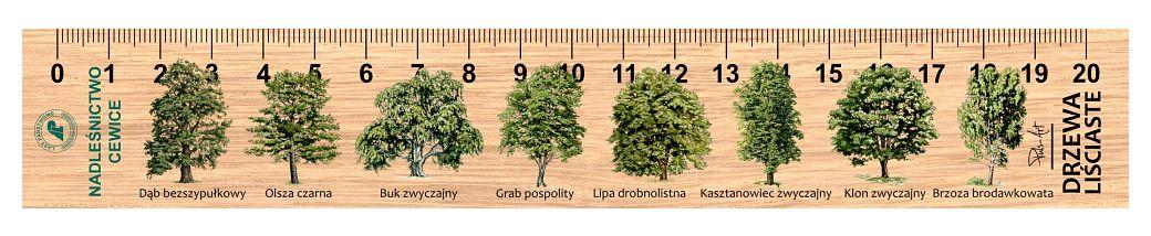 LES-11 - drzewa lisciaste (linijki drewniane)