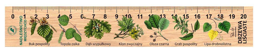 LES-18 - drzewa lisciaste (linijka drewniana)