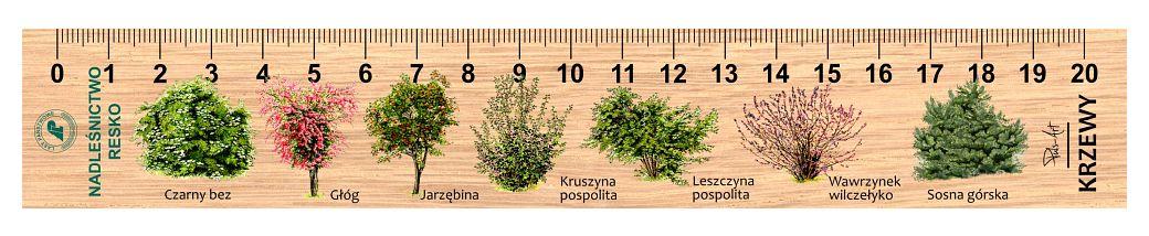 LES-23 - Krzewy (linijka drewniana)