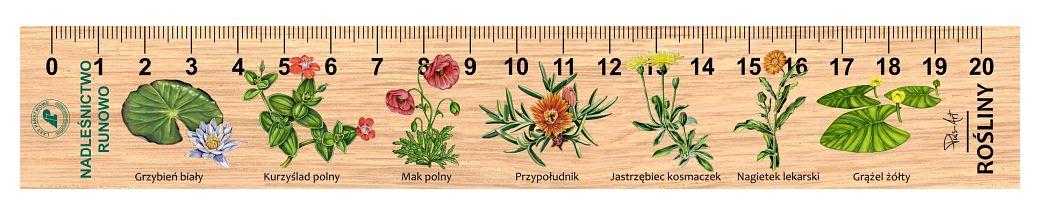 LES-24 - Rosliny (linijki drewniane)