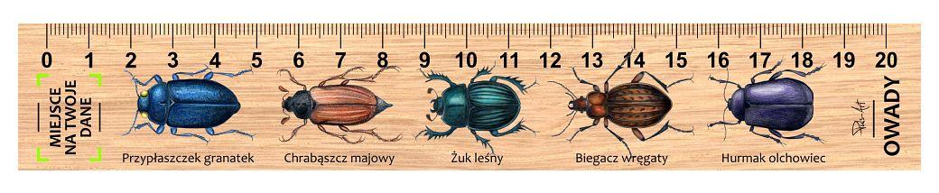 LES-29 - Owady (linijka drewniana)