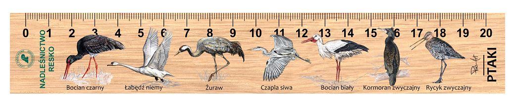 LES-32 - Ptaki (linijki drewniane)