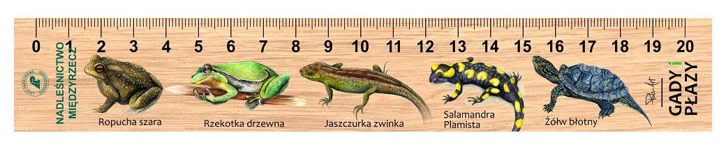 LES-5 - gady i plazy (linijka drewniana)