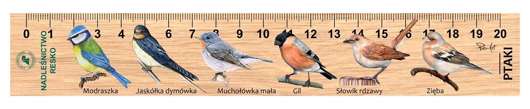 LES-55 - ptaki male 3 (linijki drewniane)