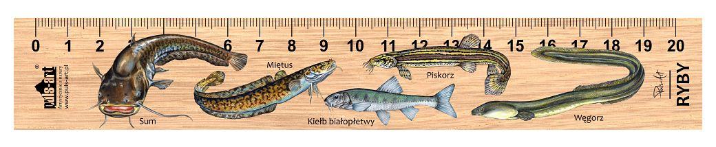 LES-58 - Ryby (linijka drewniana)