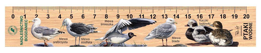 LES-62 - Ptaki wodne (linijka drewniana)
