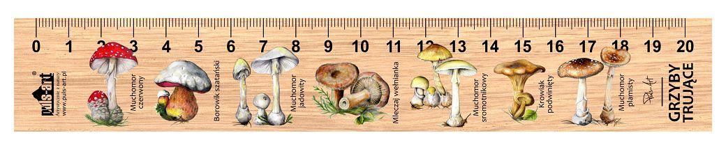 LES-8 - grzyby trujace (linijki drewniane)