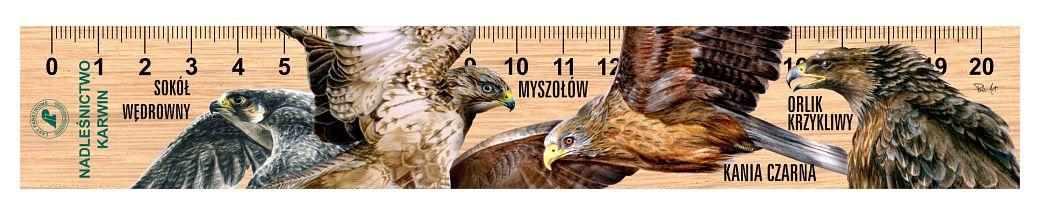 LES-80 - Ptaki drapiezne (linijka drewniana)