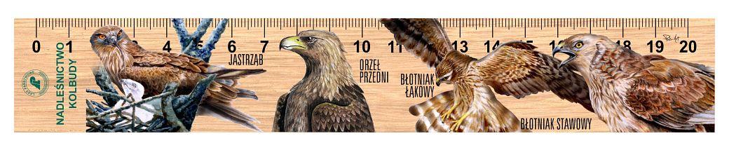 LES-81 - Ptaki drapiezne 2 (linijki drewniane)