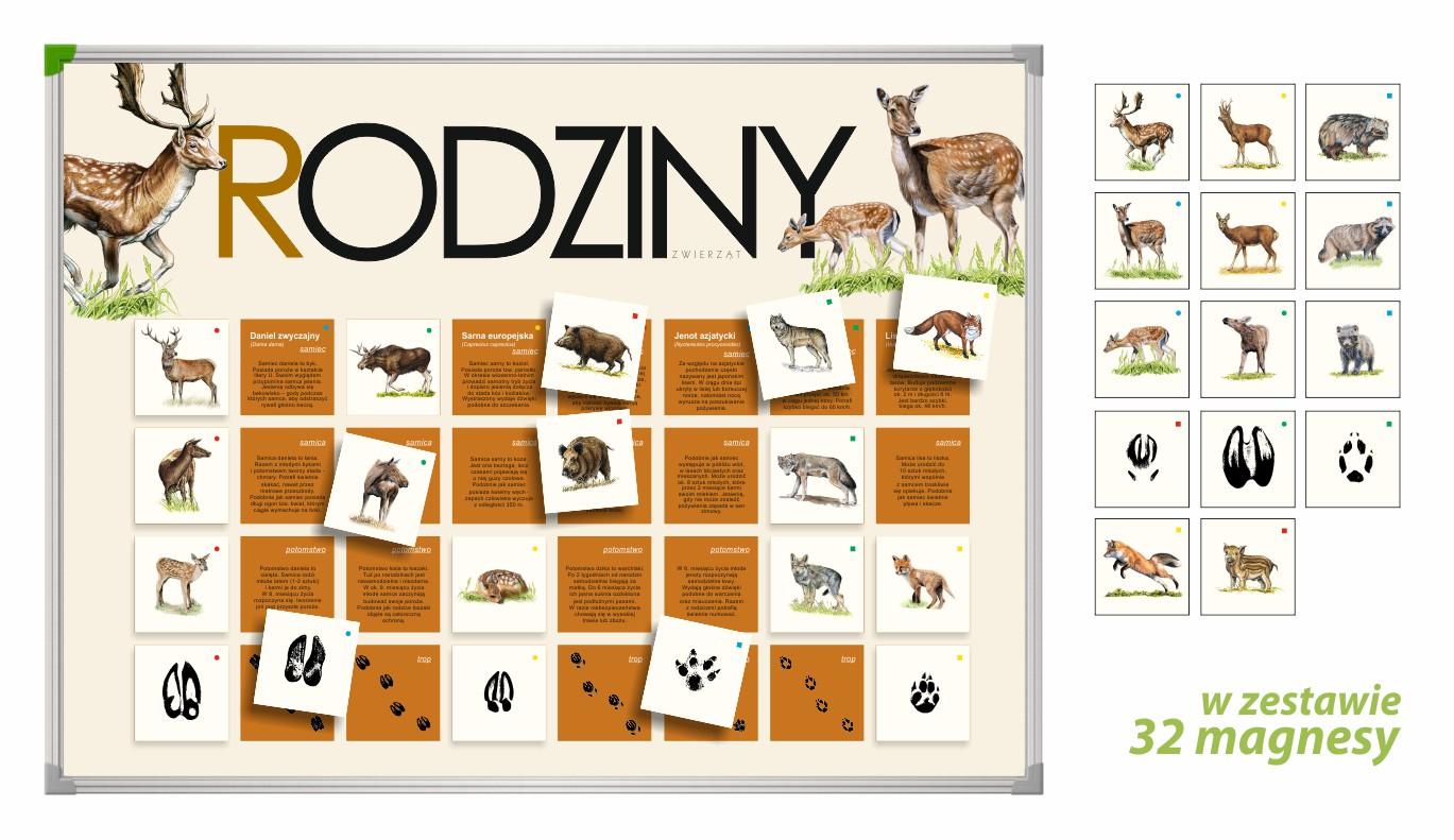 TM-11 - Rodziny (tablica magnetyczna, gry przyrodnicze, pomoce dydaktyczne przedszkole)