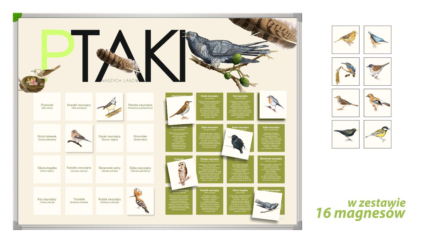 TM-2 - Ptaki (tablica magnetyczna, gry przyrodnicze, pomoce dydaktyczne przedszkole)