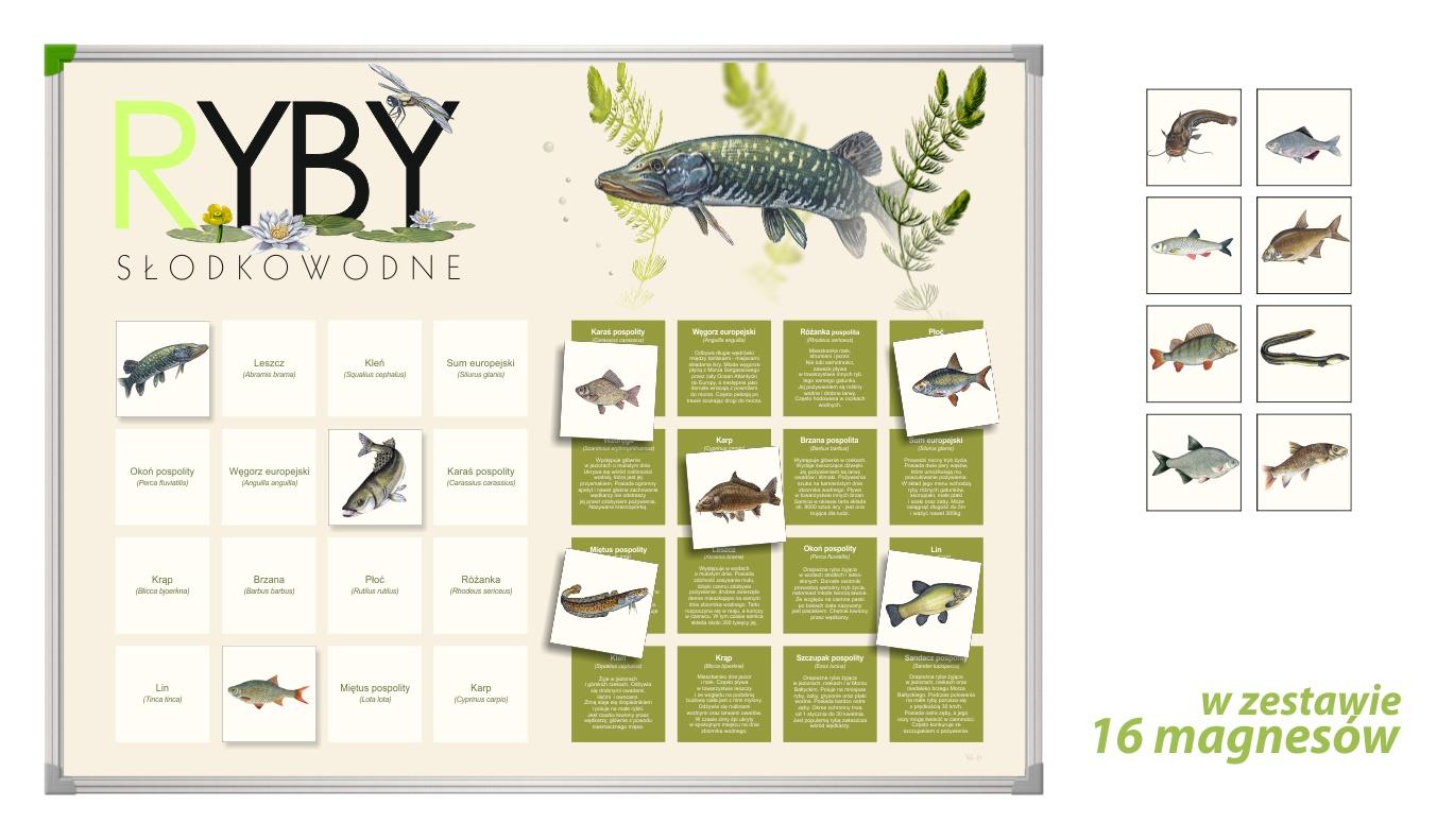 TM-8 - Ryby (tablica magnetyczna, gry przyrodnicze, pomoce dydaktyczne przedszkole)