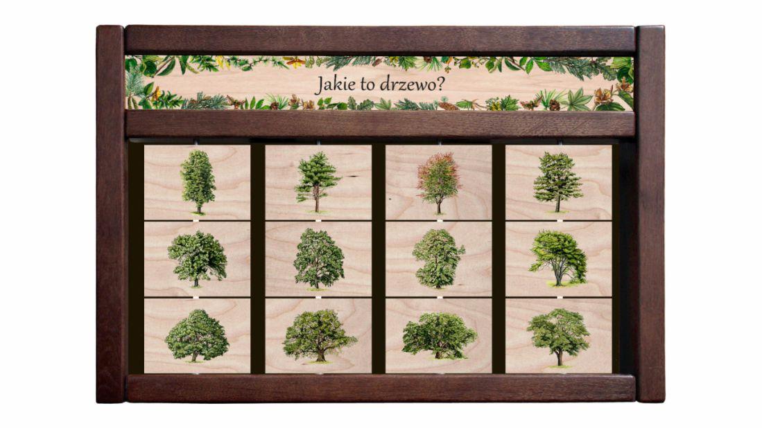 ZIDM-11 - Tablica interaktywna - Jakie to drzewo