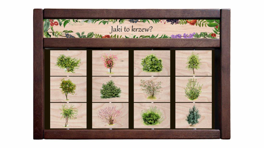 ZIDM-13 - Tablica interaktywna - Jaki to krzew