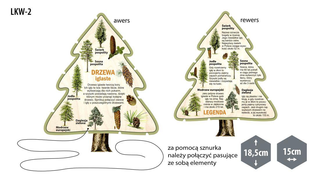 LKW-2 - Leśne kształty wiedzy (Drzewa iglaste)