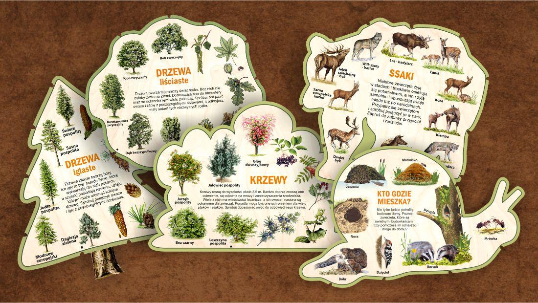 Leśne kształty wiedzy - glowne