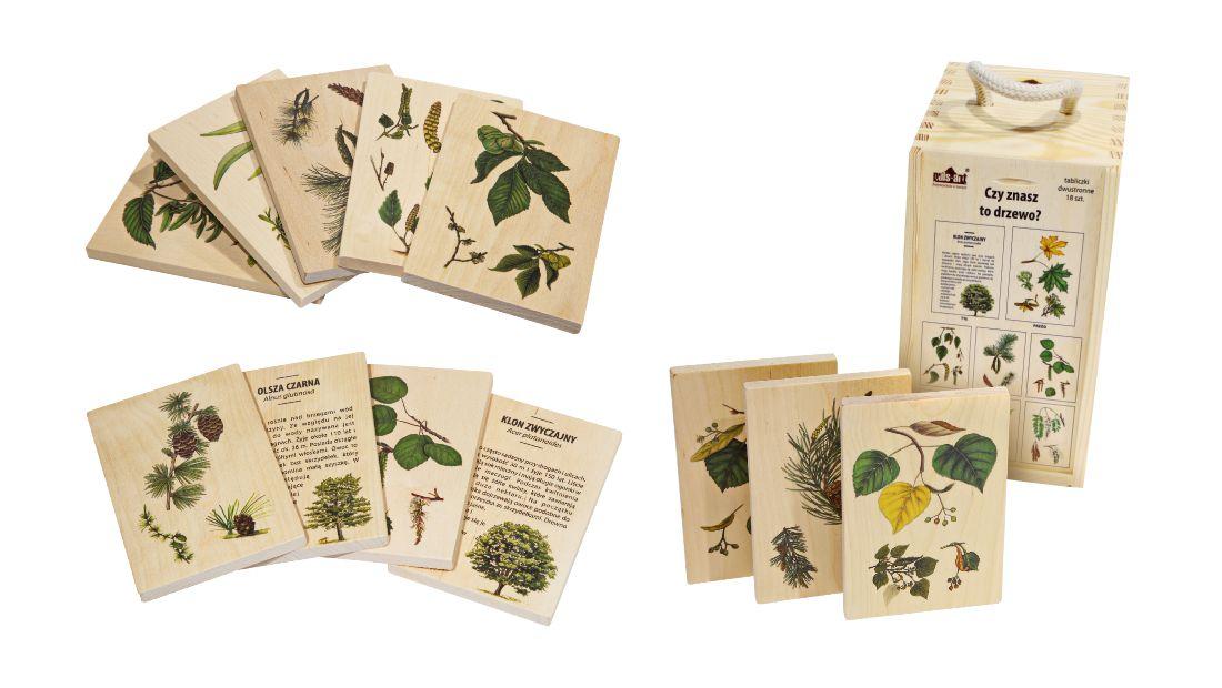 Edukacja ekologiczna i przyrodnicza – ABC przyrody - Czy poznajesz to drzewo