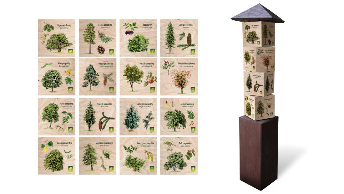 KWm-6 - Gra edukacyjna kostki wiedzy - lisciaste, iglaste, krzewy, owoce lesne