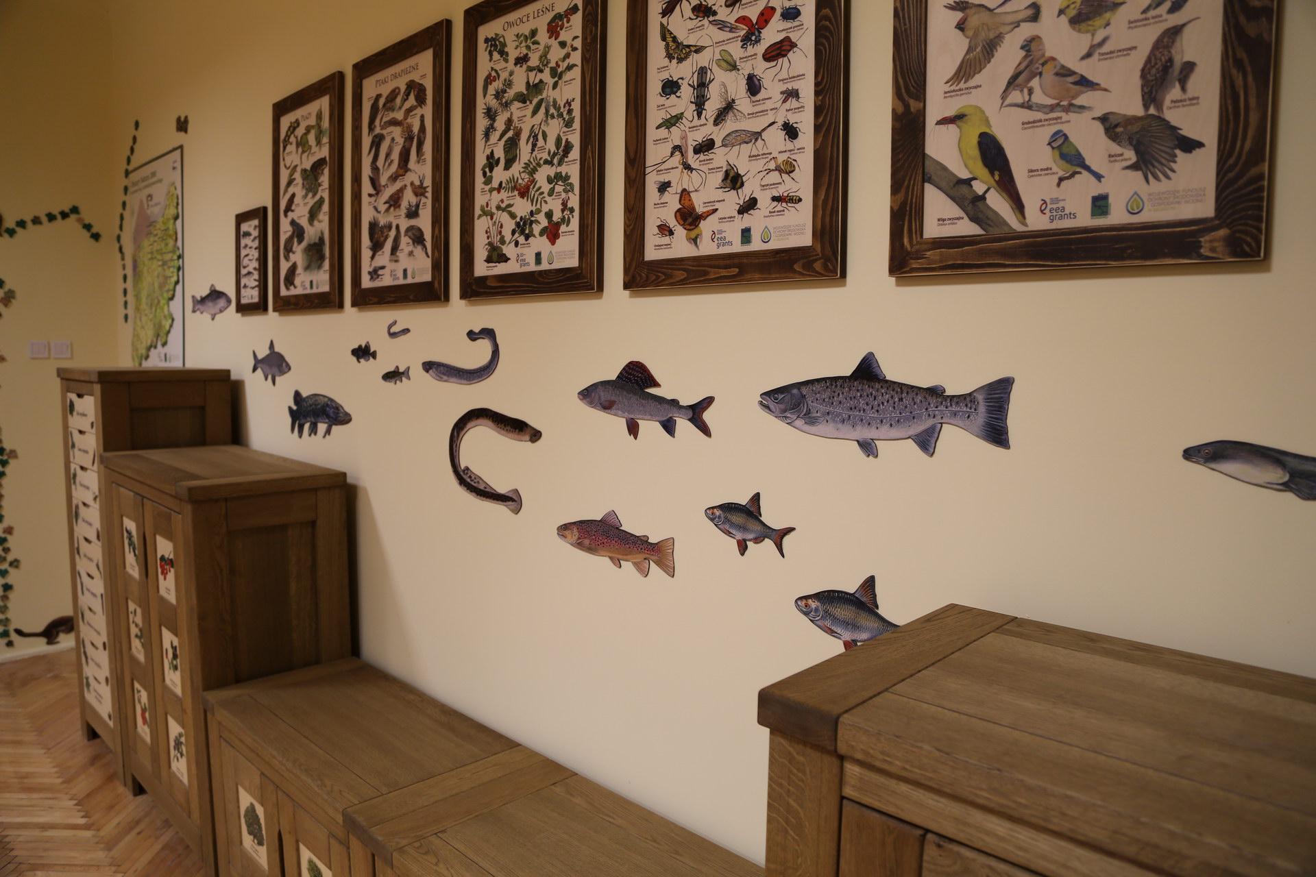 Izby edukacyjne lesne - sale przyrodnicze, wystroj wnetrz - SP nr 4 w Bialogardzie (3)