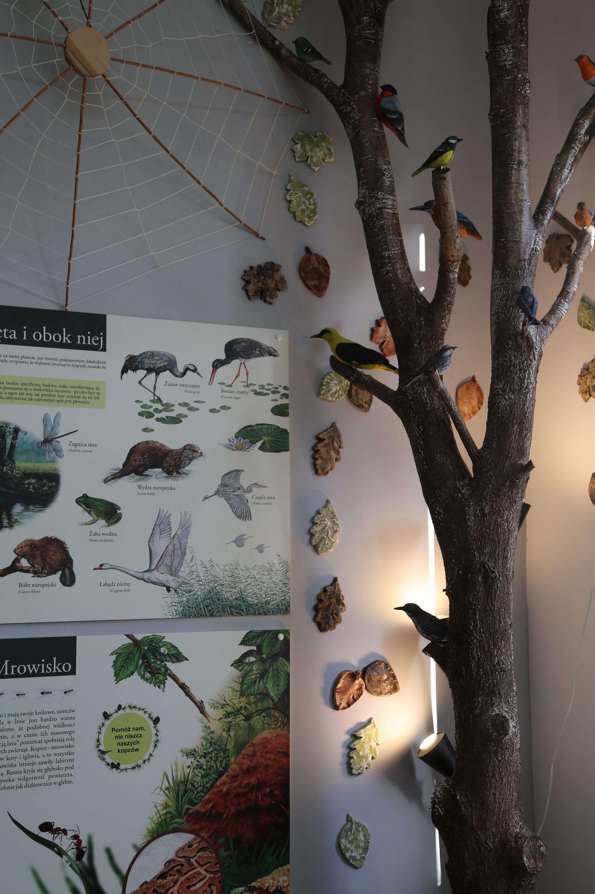 Izby edukacyjne lesne - sale przyrodnicze, wystroj wnetrz - ZS Goscino (1)