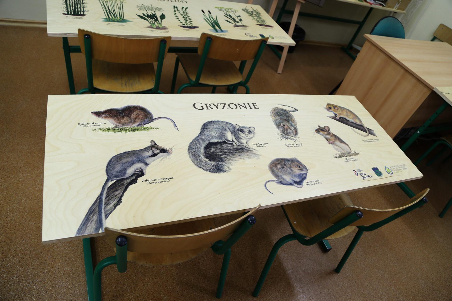 Izby edukacyjne lesne - sale przyrodnicze, wystroj wnetrz - ZS w Siemyslu (4)