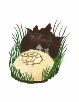 Kurzawka ołowiana (Bovista plumbea)