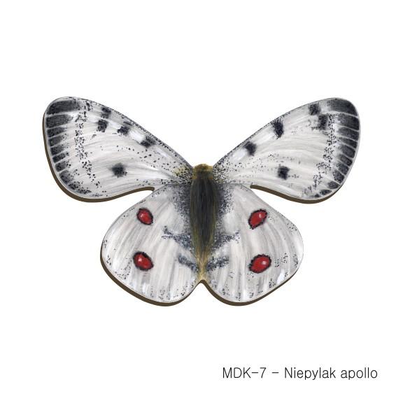 MDK-7 - Niepylak apollo (magnesy drewniane ksztalty)