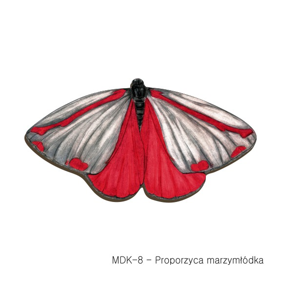 MDK-8 - Proporzyca marzymłodka (magnesy drewniane ksztalty)