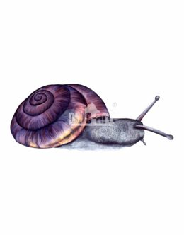 Krążałek drobny (Punctum pygmaeum)