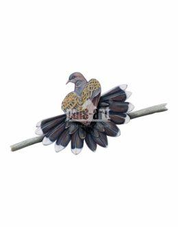 Turkawka zwyczajna (Streptopelia turtur)