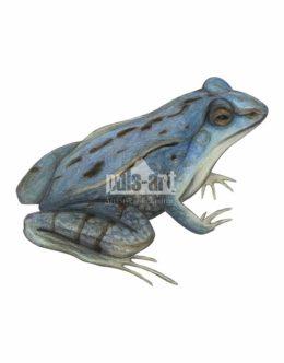Żaba moczarowa (Rana arvalis) - samiec