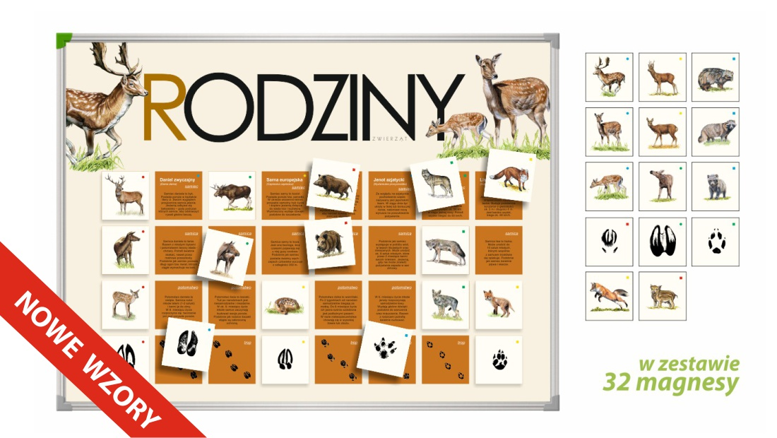 tablica magnetyczna, gry przyrodnicze, pomoce dydaktyczne przedszkole