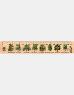 LESs-11 - drzewa lisciaste (linijka drewniana)