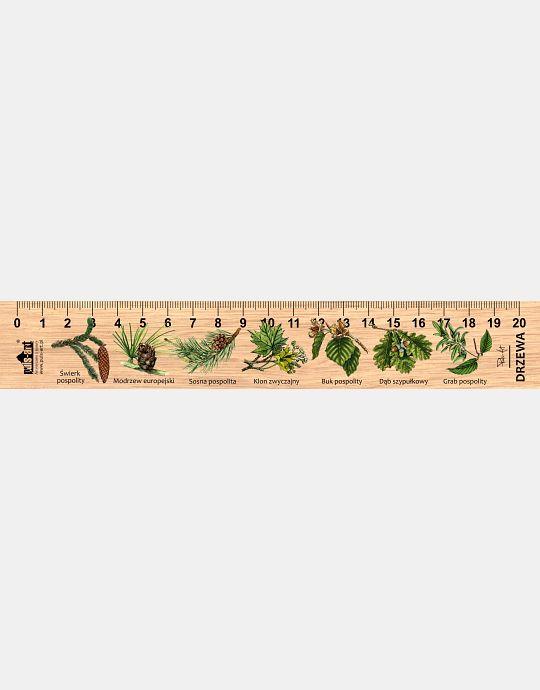 LESs-17 - Drzewa lisciaste i iglaste (linijka drewniana)
