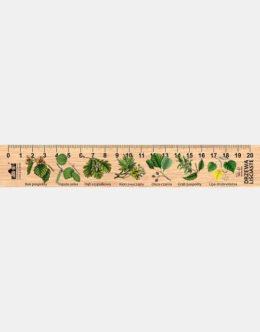 LESs-18 - drzewa lisciaste (linijka drewniana)
