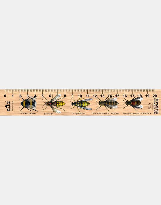 LESs-35 - Pszczolowatw (linijka drewniana)