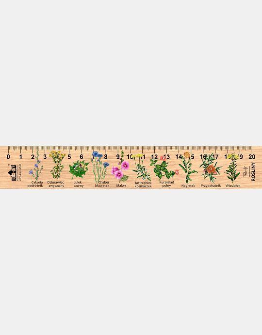 LESs-41 - Rosliny (linijka drewniana)
