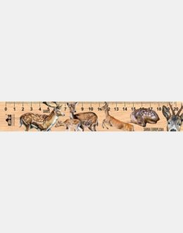 LESs-76 - Daniel i Sarna (linijka drewniana)