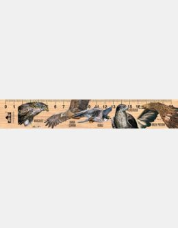 LESs-82 - Ptaki drapiezne 3 (linijka drewniana)