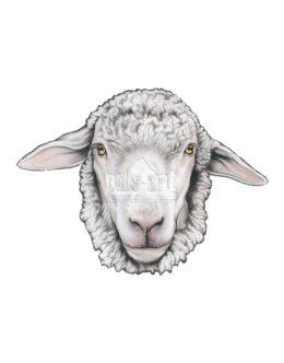 Maska - owca