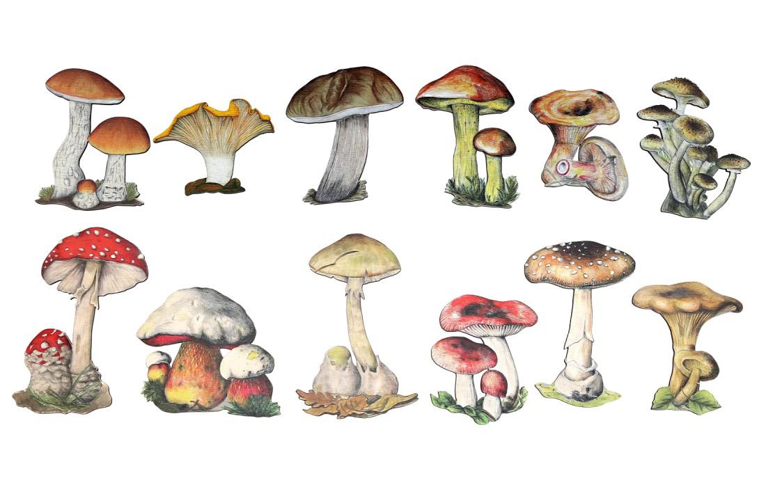 Zgadnij jaki to grzyb?