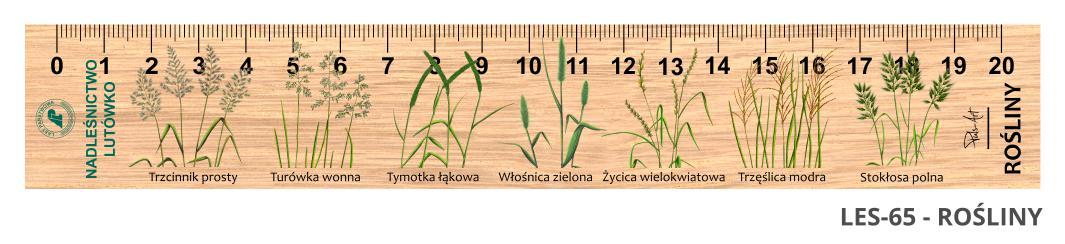 LES-65 - WIelichowate 2 (linijki drewniane)