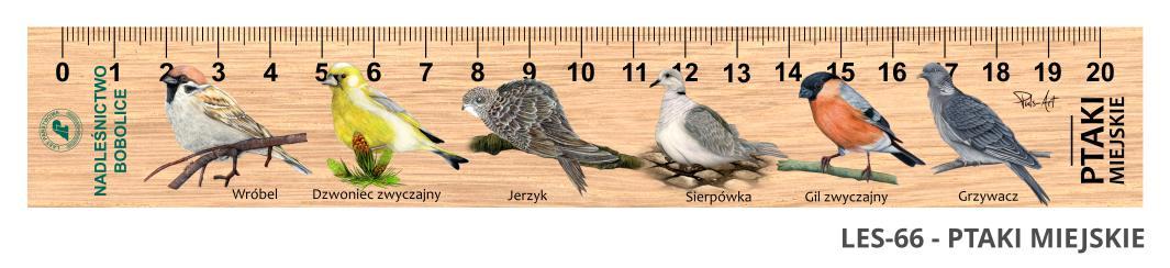 LES-66 - Ptaki miejskie (linijka drewniana)