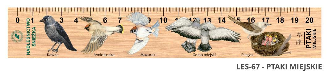 LES-67 - Ptaki miejskie 2 (linijki drewniane)