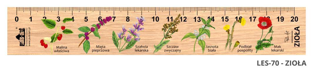 LES-70 - Ziola (linijki drewniane)