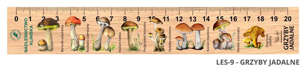 LES-9 - grzyby jadalne (linijka drewniana)
